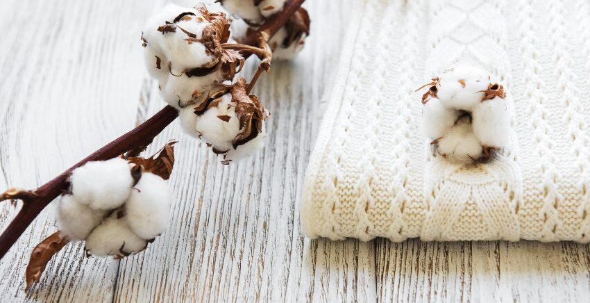 Baumwollpflanze und Strickschal